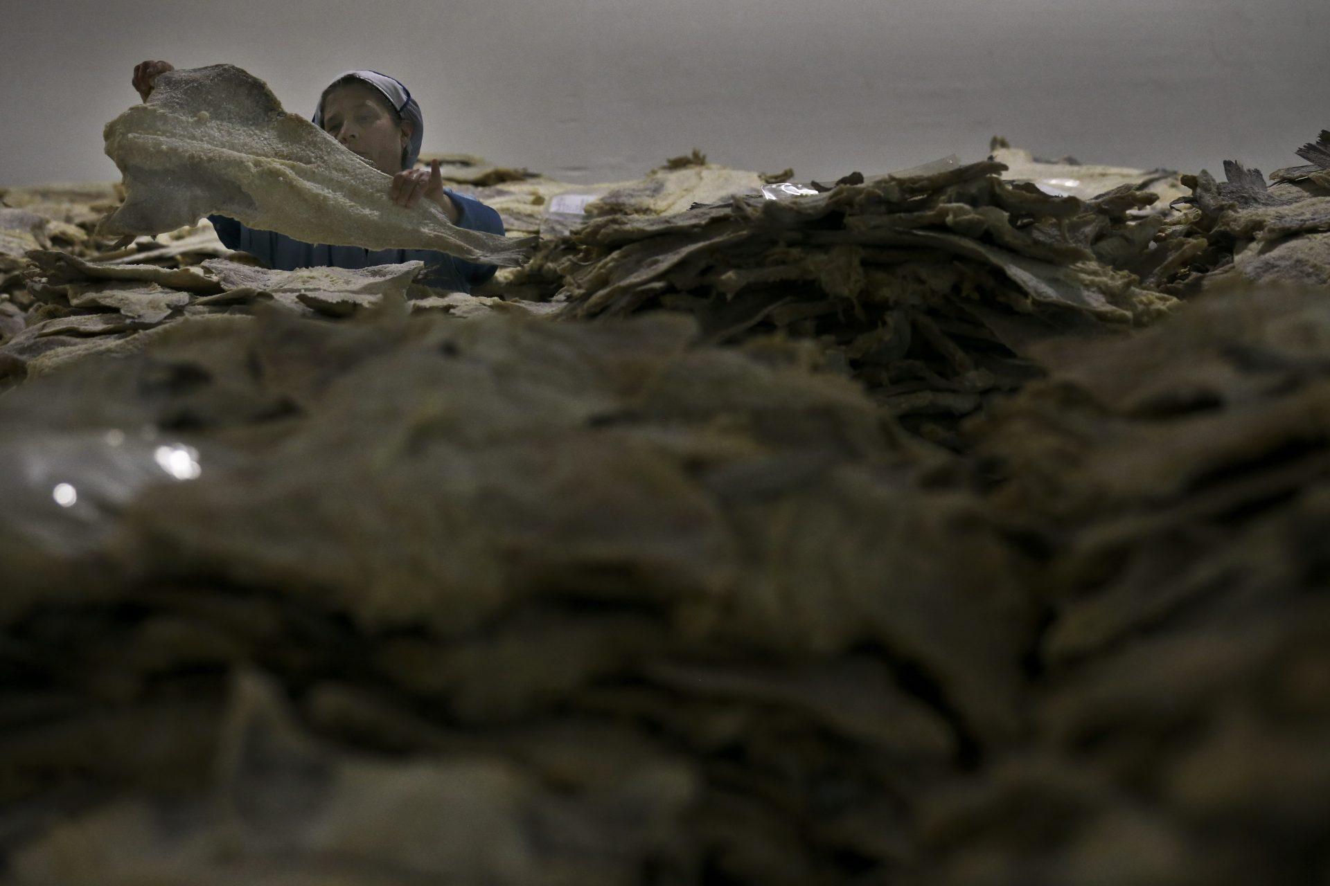 Fábrica de transformação de bacalhau no Montijo, 18 de dezembro de 2015. Os consumidores preferem o bacalhau pronto a cozinhar, já demolhado e congelado, ao tradicional, demonstram as vendas da Ribeiralves, líder de mercado, cujas vendas do primeiro representam pela primeira vez 52% do seu volume de negócios. ANDRÉ KOSTERS / LUSA