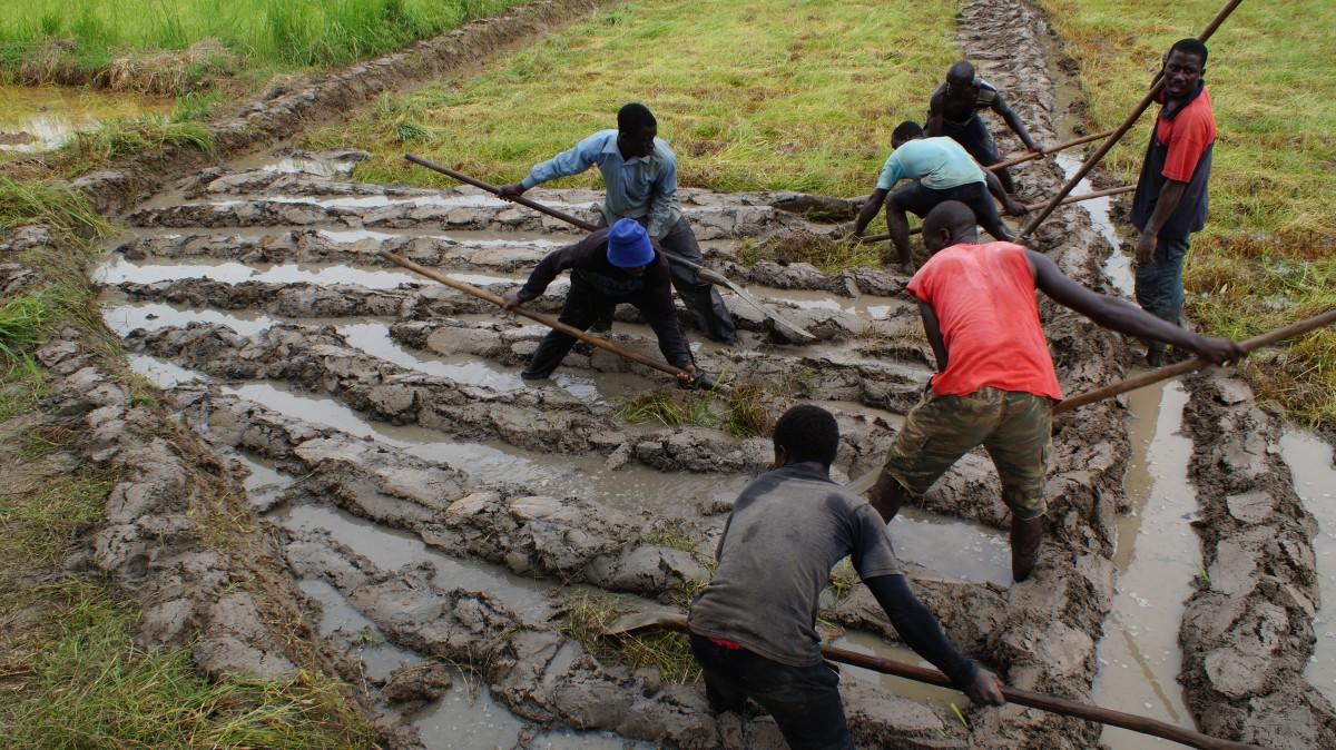 Para um guineense não há mesa composta, por mais farta que esteja, se faltar o arroz. Bissau, 22 de setembro de 2013. LUSA
