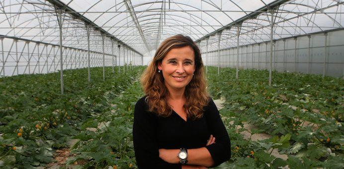 Carla Miranda, da direção da Associação Interprofissional de Horticultura do Oeste, no interior de uma estufa de produção de courgettes da região de Torres Vedras, 7 de novembro de 2015. MANUEL DE ALMEIDA/LUSA