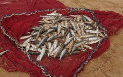 Episódio 83 – nem tudo o que vem à rede é peixe