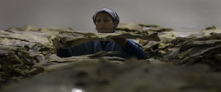 Bacalhau e polvo ainda são a tradição, mas há quem prefira capão e litão