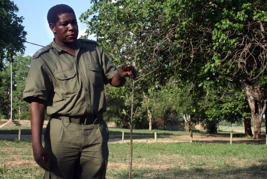 Pedro Muagura diretor de Conservação do Parque Nacional da Gorongosa fotografado em 02 de dezembro de 2016. Pedro plantou 45 milhões de árvores com as próprias mãos no Parque Nacional da Gorongosa em Moçambique. (ACOMPANHA TEXTO DE 17/03/2017). HENRIQUE BOTEQUILHA / LUSA