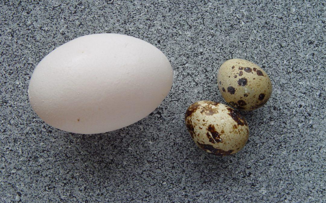 """O que significa """"No frigir dos ovos""""?"""